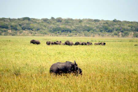 Reserva do Sul - Maputo